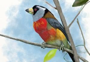 7 Color Bird by Albert Root (Screenpainter GZAirborne)