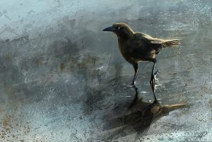 Bird In A Puddle by Steve Goad