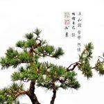 Bonsai Art V 12x12 Brian Coffey Featured ArtRage Artist