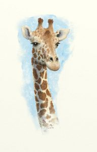 Giraffe, watercolor art by Markw