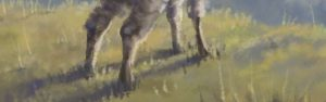 HilltopView Clumpy Wool Custom Brush Sav Scatola grass shadow