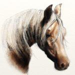 Horse pencil artrage 5 square
