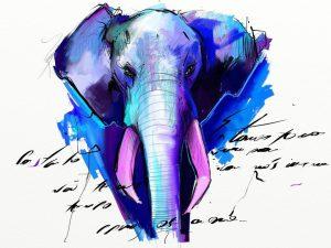 Elephant by Fernando Madeira