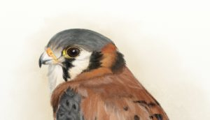 Kestrel pencil ArtRage 5