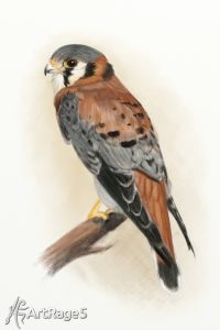 Kestrel color pencil ArtRage 5