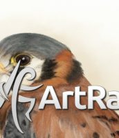 'ArtRage 5 Coming Soon' Holiday Sale