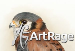 Kestrel pencil drawing in ArtRage 5