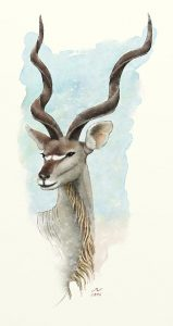 Kudu, watercolor art by Markw