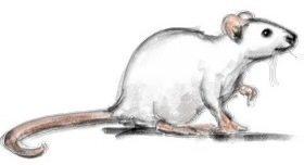 Pencil Mouse artrage april fools