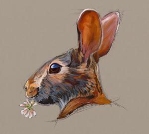 Rabbit Study by Shelly Hanna (small)