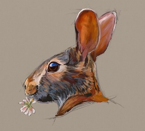 Rabbit Study by Shelly Hanna (small)