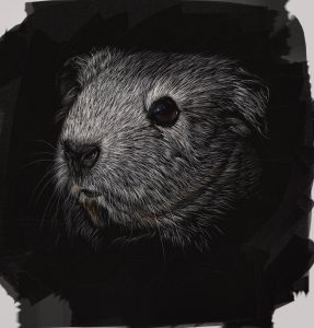 Scratchboard Guinea Pig Final by Shelly Hanna