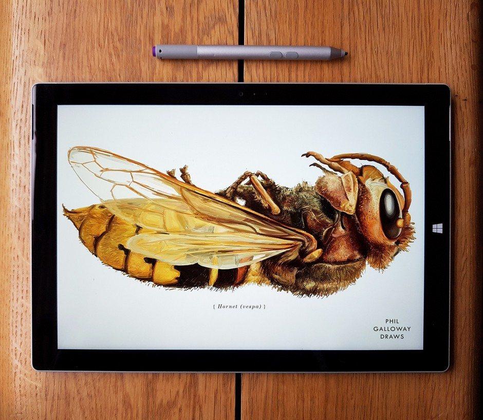 Anatomy of a Win, Hornet ArtRage artist Phil Galloway