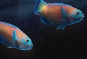 airbrush parrot fish noise filter artrage 5