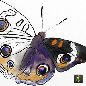 artrage android butterfly