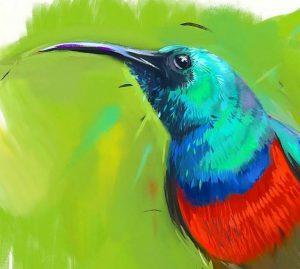 Eastern double-collared sunbird by Batuhan Bayrak