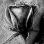 charcoal chalk rose artrage 5