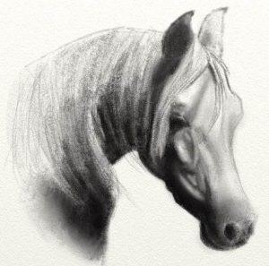 horse pencil sketch artrage 5