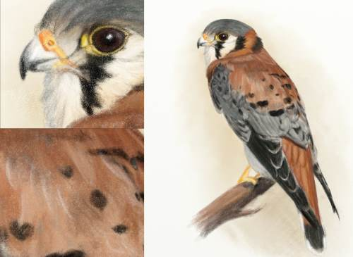 kestrel pencil close ups