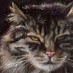 pastel cat artrage 5 ramona macdonald