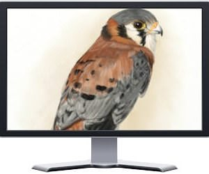 Falcon art on PC Monitor