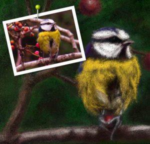 references pencil bird greattit artrage 5