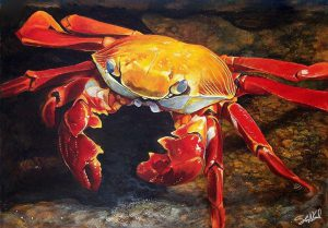 Sally Lightfoot Crab (traditional acrylics painting) by Steve Goad